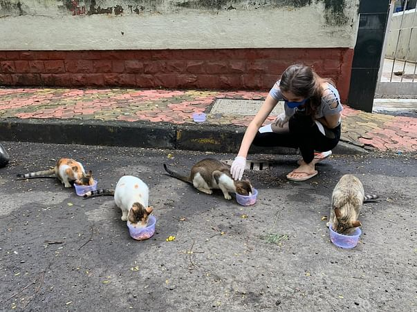 FEED STRAY DOGS & CATS