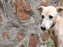 Help Sahil & Cherida Start An Old Age Home For Animals