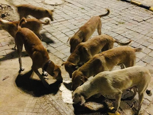 Help Us Feed Stray Dog's