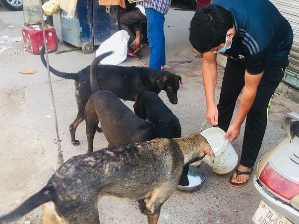 Help Us Feed Stray Dog's
