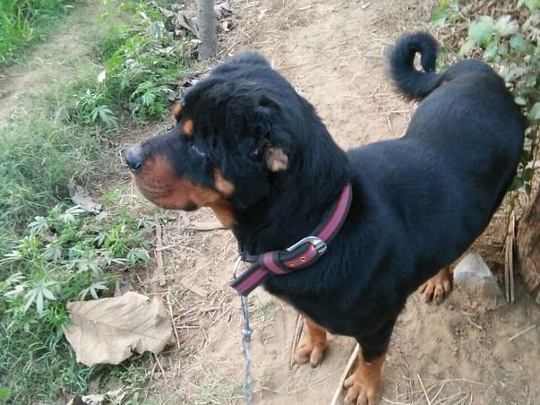 Help Rajputana Sanctuary Take Care of Street Animals