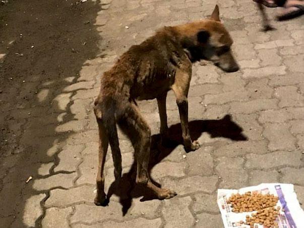 Help Abandoned, Malnourished Rocky🙏🏼