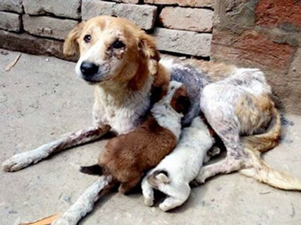 Lets feed street dogs and animals