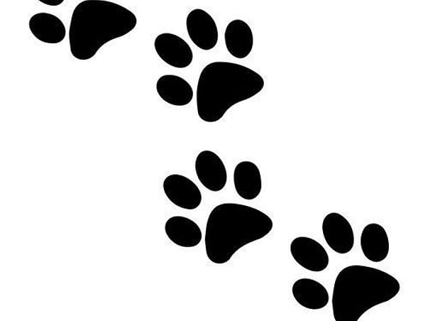 Save a Paw