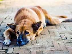 A little help for Stray Dogs Foods