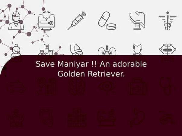 Save Maniyar !! An adorable Golden Retriever.