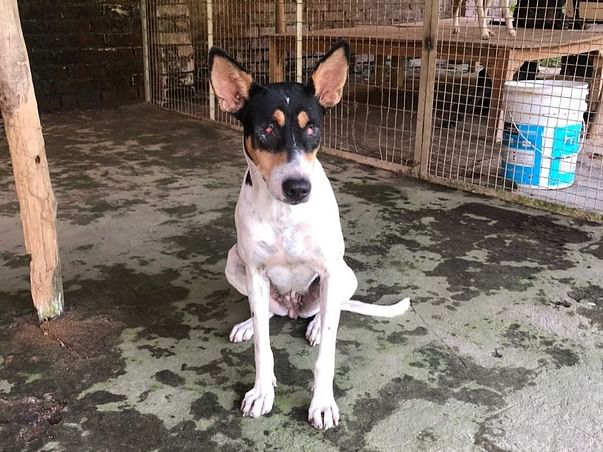 Help Stray Dogs - Pawco Reg No. ALL/02899/2018-2019