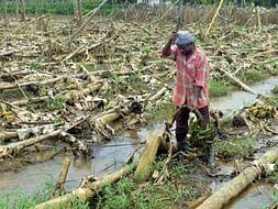 Help our Farmers!!!