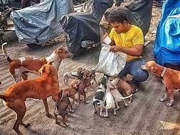 Help Nikhil Feed Stray Dogs and Cats