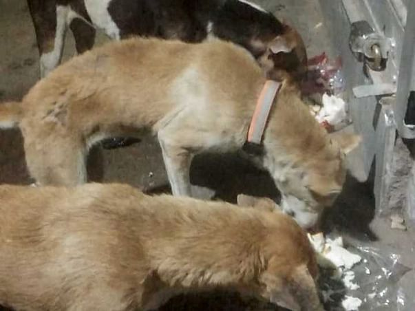Feeding and on the spot treatment of stray dogs.