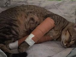 Help this cute cat to heal it's wound.