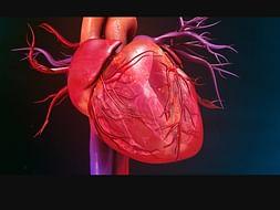 Help My Friend Kanakam Santhosh Fight Heart Failure