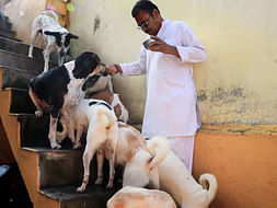 Priest Takes Care Of Dogs Even As The Pandemic Rendered Him Jobless