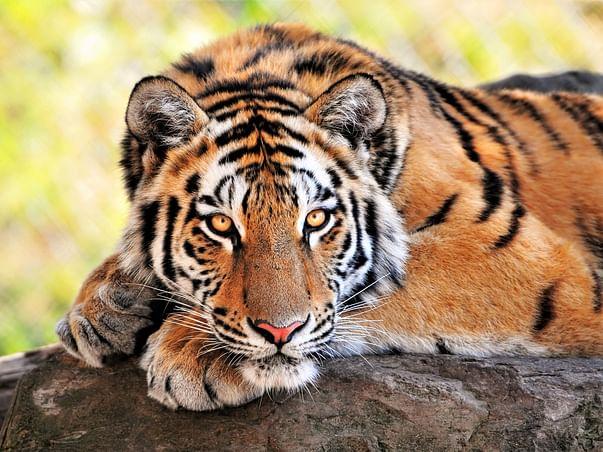 Janani's Birthday Fundraiser for the Wildlife Trust of India
