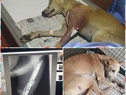 Please help Lucky to walk again