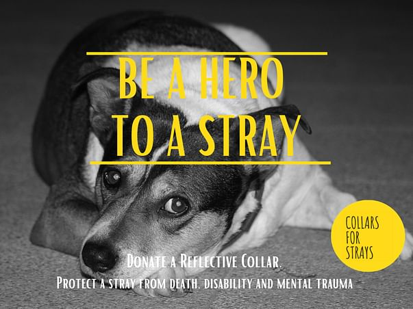 Collars for Strays