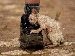 HELP THE STRAYS, BE KIND TO ALL KIND