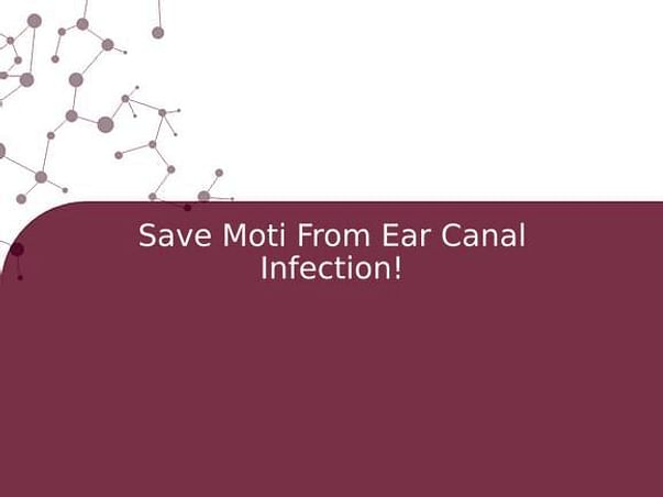 Save Moti From Ear Canal Infection!