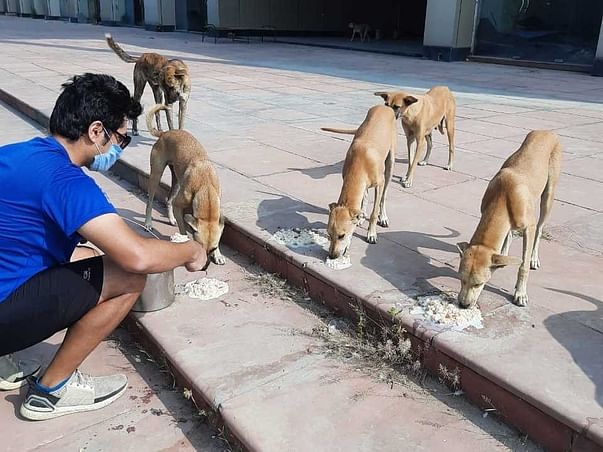 Help Rescue And Feed The Strays In The City