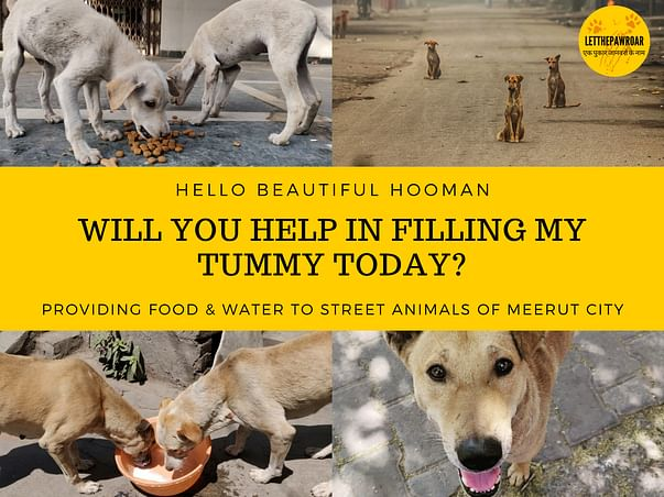 STREET ANIMALS DESERVE A CHANCE TOO. HELP & SPONSOR THEIR MEALS TODAY!