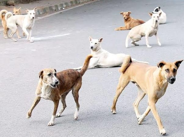 Help Street Dogs