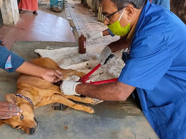 Help Arrow - Animal Rescue to raise fund for rescues and treatments