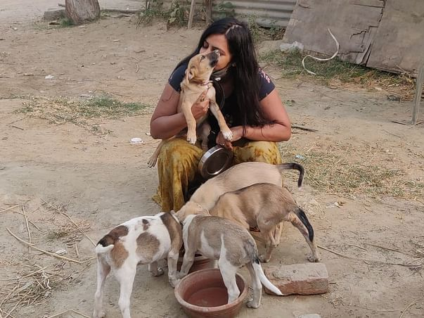 Help Feed the Stray Dogs and Cows
