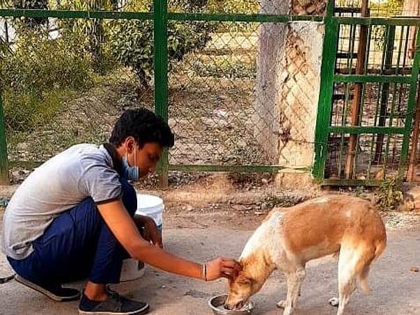 Help of animals by feeding twice a day