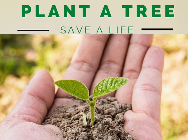 Help Me To Plant 50000 Trees