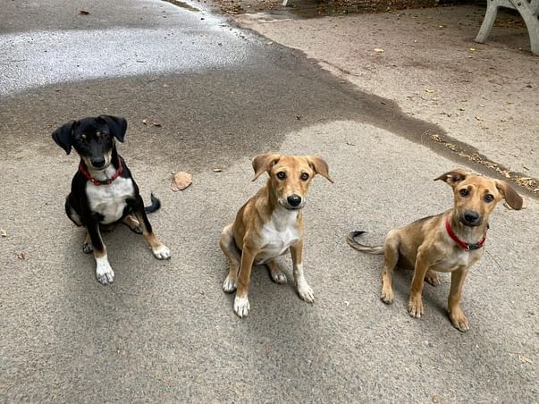 Help 120+ Rescued/Stray Dogs to fight Hunger, Thirst and Illness!