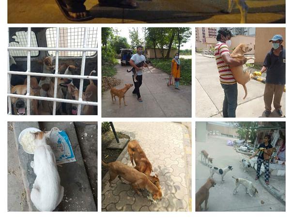 Help the animals survive this lockdown