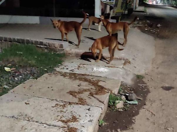 Help us in feeding the stray animals in Bhubaneswar.