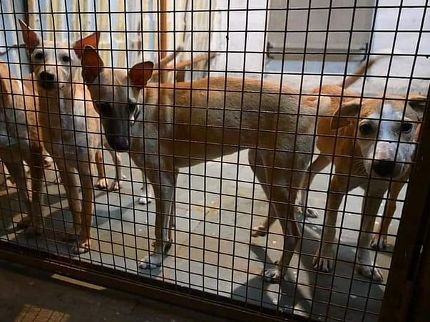 Help our Animal Shelter Sustain in Lockdown