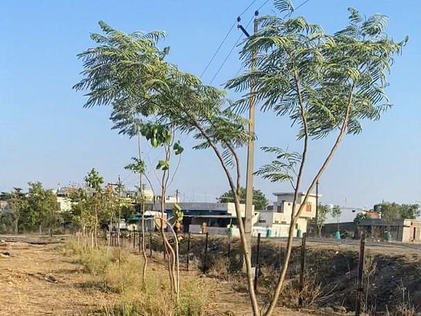 Trees Plantation