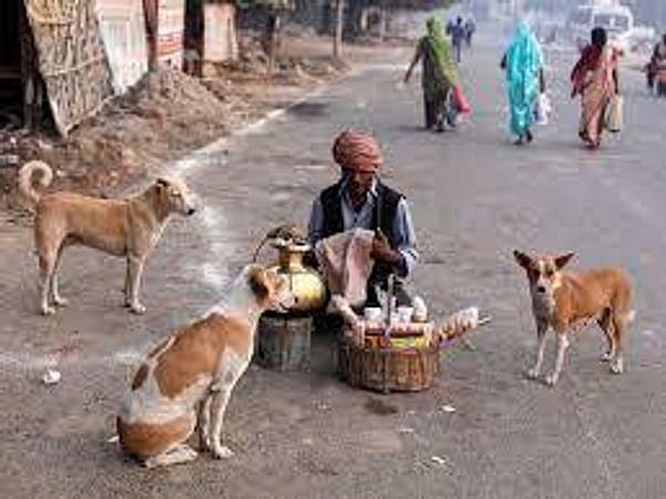 Help feed Bangalore street doggos (https://bit.ly/2S7AA8p)