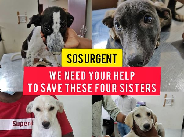 HELP US SAVE THE GIRLS