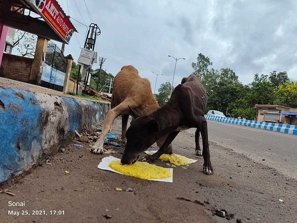 Feeding For Stray Dogs During Lockdown