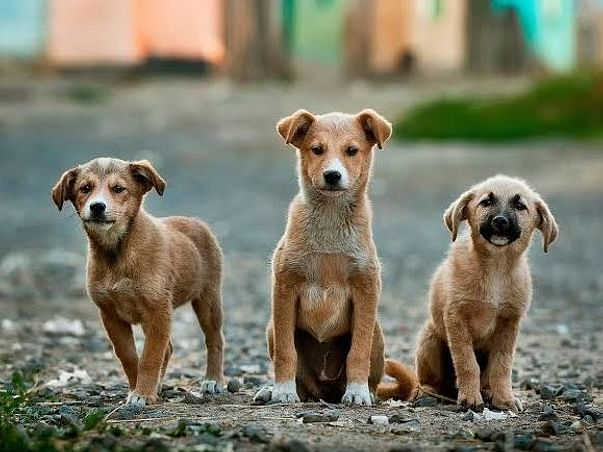 Help Us Raise Funds To Feed Street Dogs