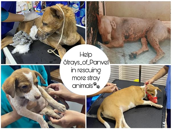 Support Strays_Of_Panvel In Rescuing Injured/Sick Stray Dogs