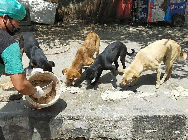 Help Friendicoes feed 2500+ dogs in Delhi