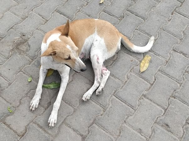 Food And Shelter Relief For Stray Animals.