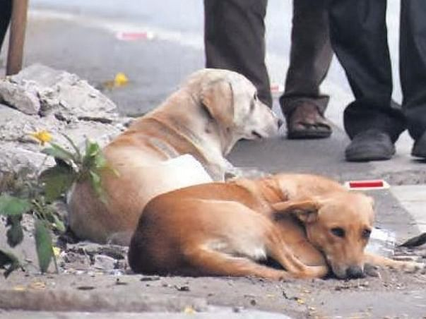 Help feed stray animals during covid19
