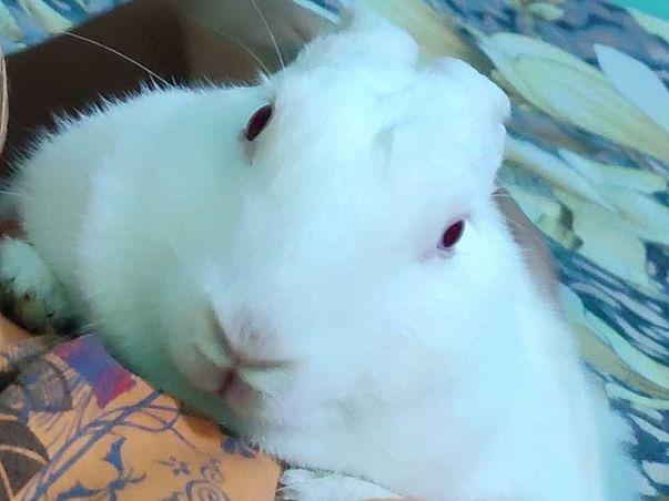 Please help My (Badu) Rabbit save her life