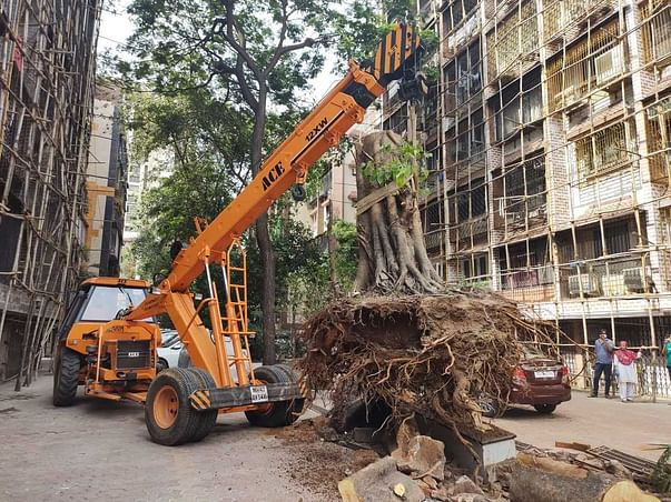 Save Mumbai's Fallen Trees