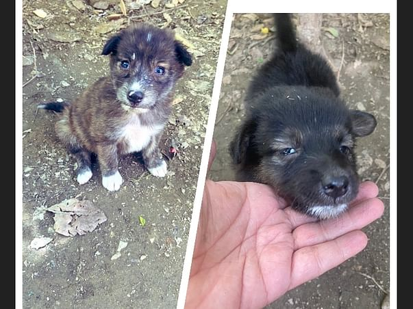 Help Me To Save Two Puppies