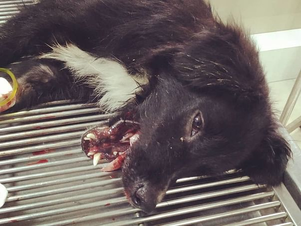 Help Us Pay For Midnight's Medical And Boarding Bills
