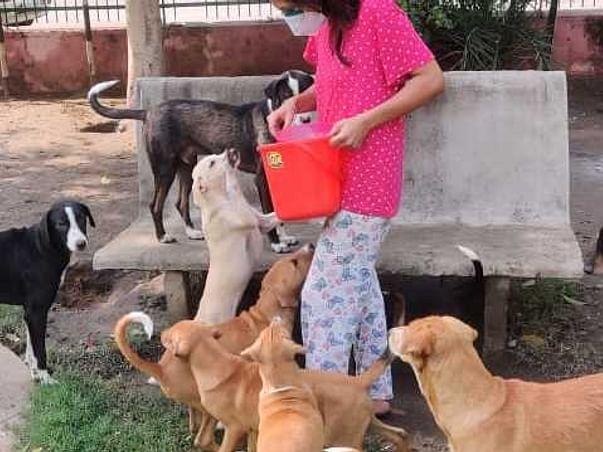 Help Awaj build shelter for street animals