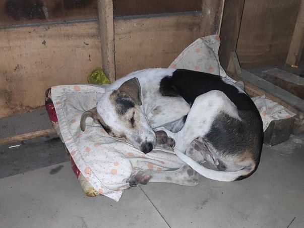 Help The Dogs of RGKMCH, Kolkata