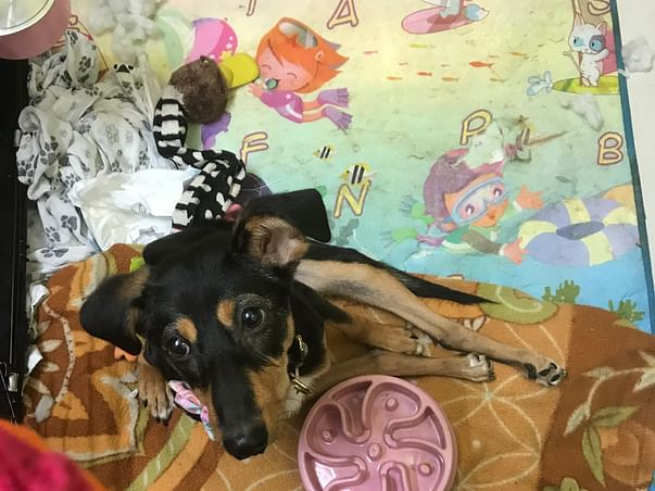 Help Nova Fly To USA And Get A Second Chance At Life