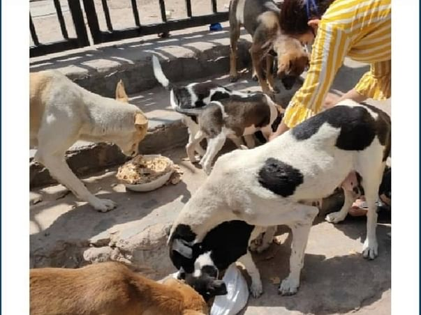 Help And Support To Rescue And Feed  Street Dogs